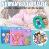 puzzle sa invatam despre corpul uman 5