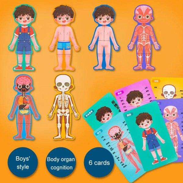 puzzle sa invatam despre corpul uman 6